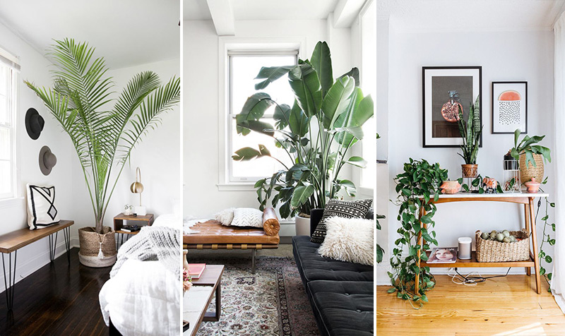 Plants Interior Design 2018