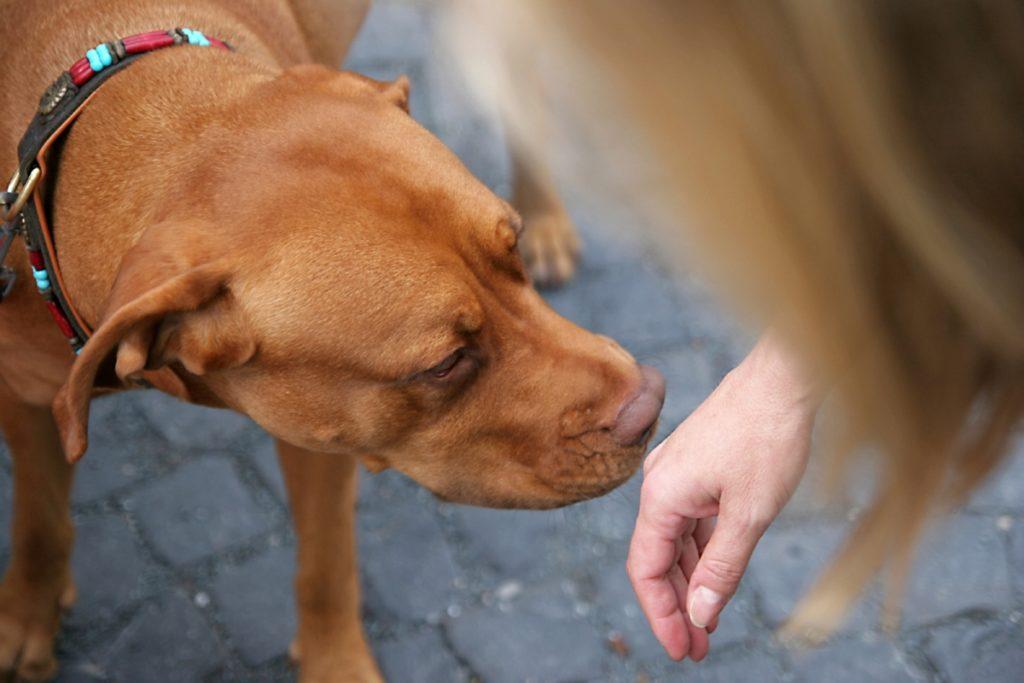 Dog smelling hand